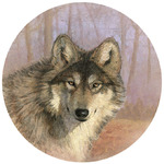 Untamed Wolf Spirit Coasters