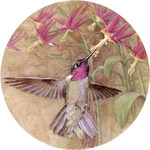 Winged Jewel Hummingbird Coasters