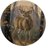 Buck in Woodland Mist Coasters