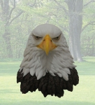 """Spirit"" Large Eagle Wall Statue"