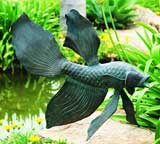 Fighting Fish Sculpture